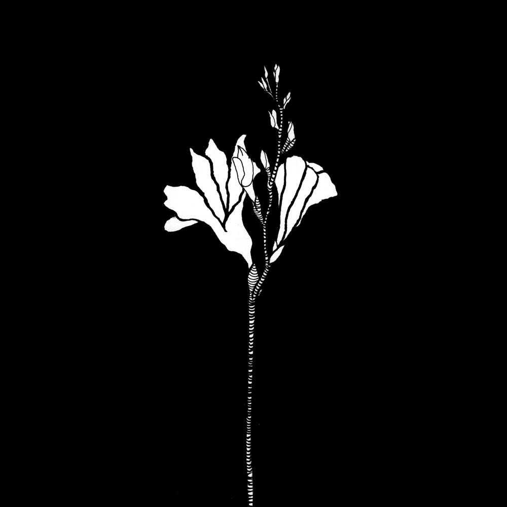 long stemmed flower in white on black background